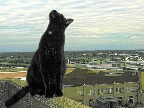 Bird Watching by Ross Odom