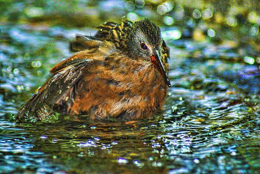Joe Bledsoe - Birdbath
