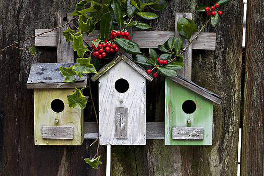 Birdhouses and Berries by Heather Reeder