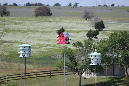 Birdhouses by Rod Andress