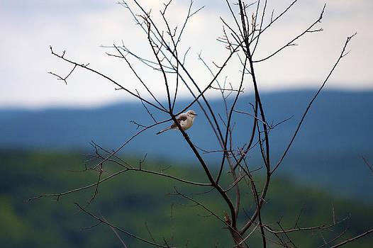 Birdie by Boris Blyumberg