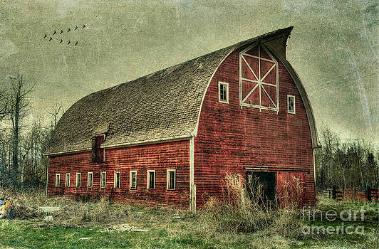 Birds and the Barn by Lori Frostad