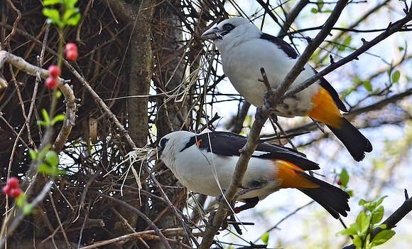 Birds and wildlife. by Pallavi Talukdar