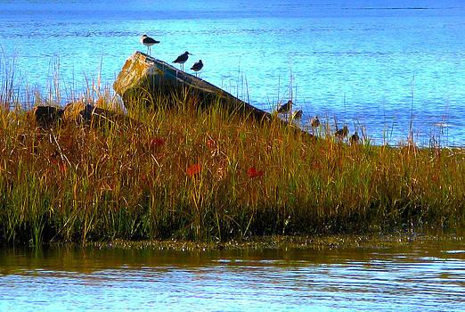 Birds at Great Bay by Lynn Harrison
