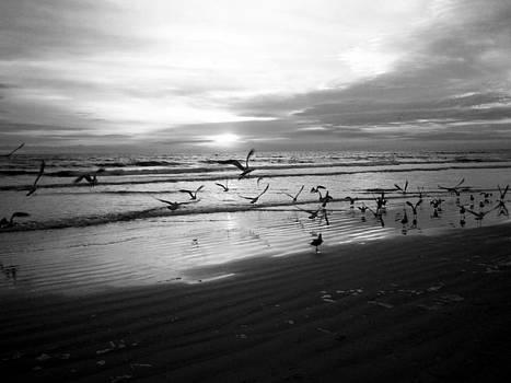 Carolyn Stagger Cokley - birds at sunrise bw