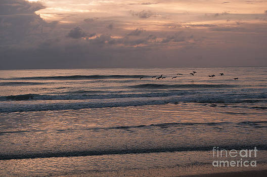Birds at the beach  by Denise Ellis