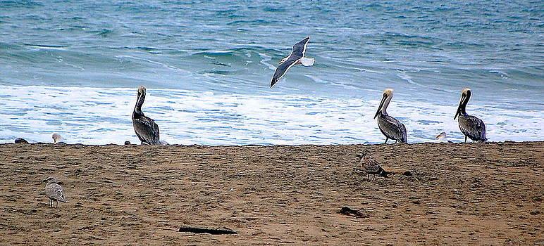 Birds Day at the Beach by AJ  Schibig