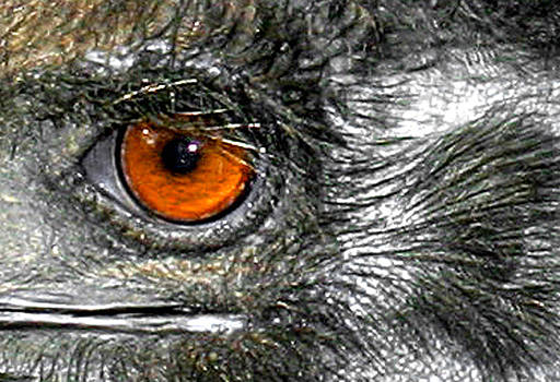 Bird's Eye View by Dawn Dreibus