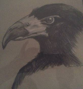 Bird's Eye View by Shawna Mangrum