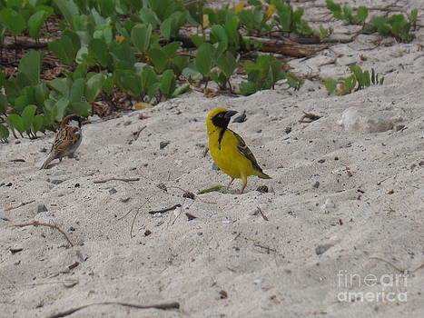 Birds - Ile De La Reunion - Reunion Island by Francoise Leandre