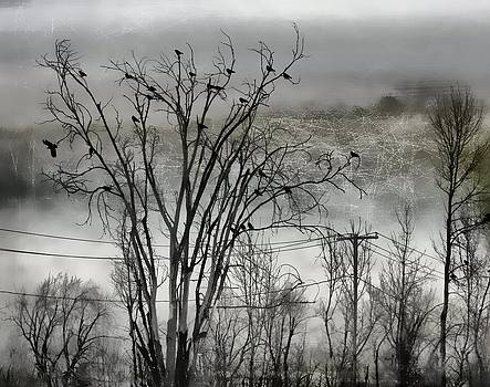 Gothicrow Images - Blackbirds In The Trees And Wires