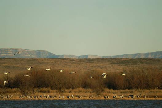 James Gay - Birds in Bosque