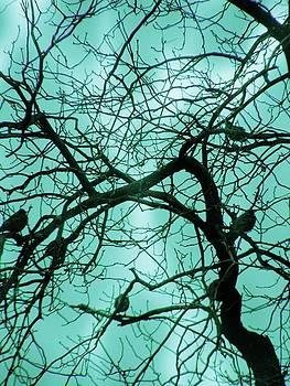 Birds in Cloudy Blue by Nancy Mitchell