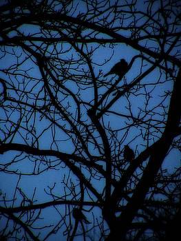 Birds in Cobalt Blue by Nancy Mitchell