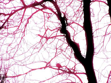 Birds in Electric Pink by Nancy Mitchell