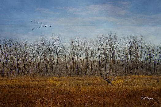Birds In Flight by Jeff Swanson
