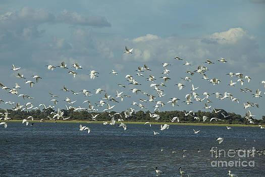 Patricia Hofmeester - Birds in flight