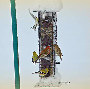 Birds in the Snow by Sheila Noren