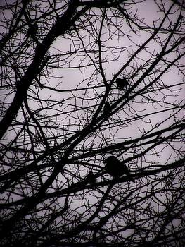 Birds in Winter Branches by Nancy Mitchell