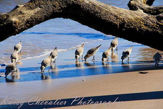 Birds by Kaisy Chevalier
