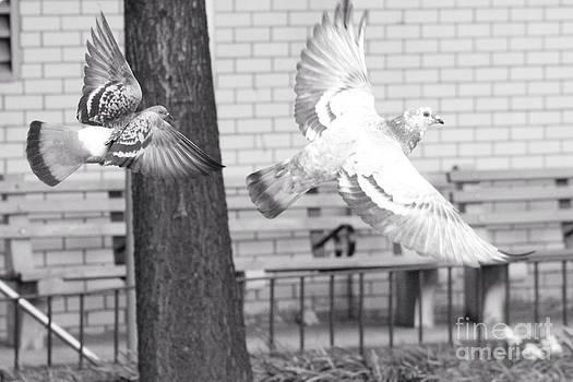 Birds by Kevin  Warren