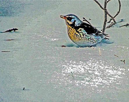 Algirdas Lukas - Birds Life