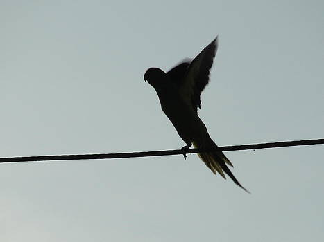 Birds by Makarand Kapare