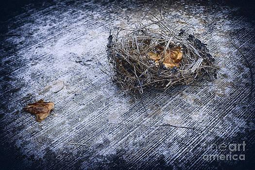 Charles Davis - Birds Nest