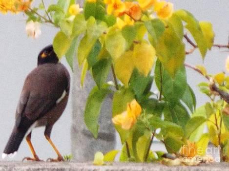 Birds by Nishit Kumar