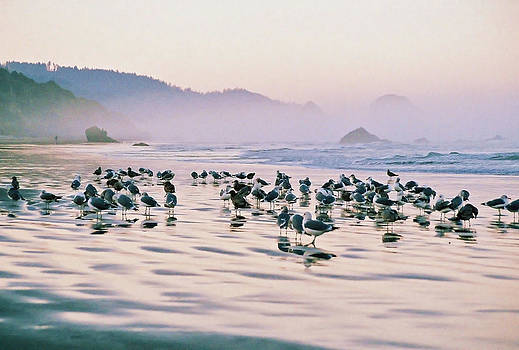Birds Of Cannon Beach by Jens Larsen