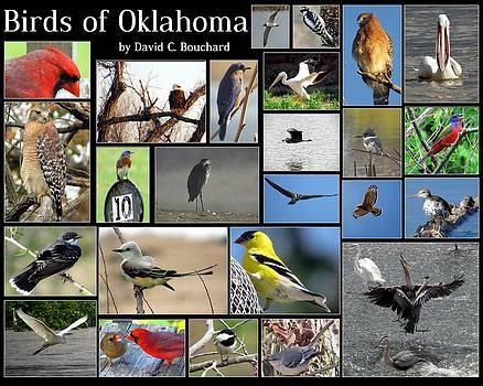 Birds of Oklahoma by David Bouchard