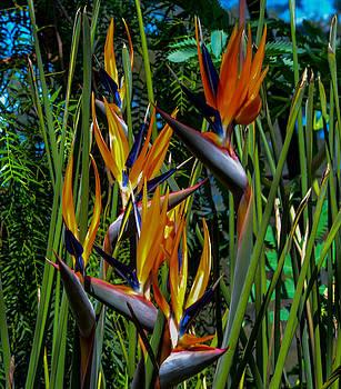 Birds Of Paradise by Wanda J King