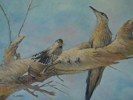 Sandra Lytch - Birds on a Eucalyptus Branch