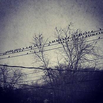 Birds On A Line by Rebecca Kowalczik
