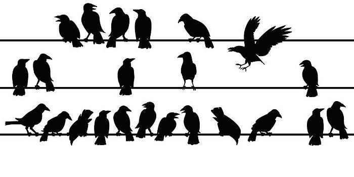 Birds On A Wire by Allen Klein