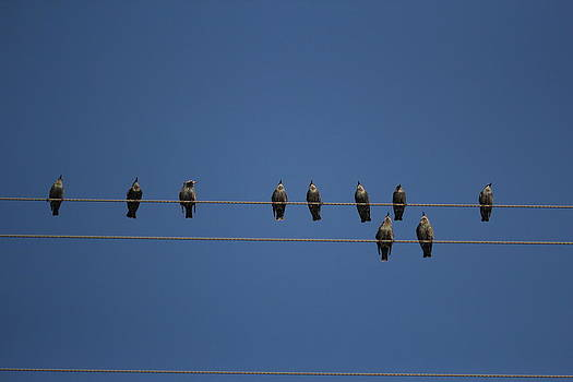 Birds on A Wire by April Wietrecki Green