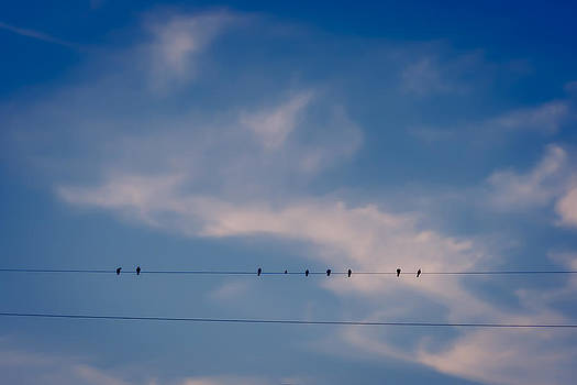 Birds on a wire by Clay Swatzell