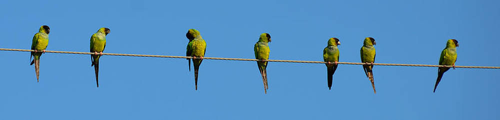 Birds on a wire by Julie Cameron