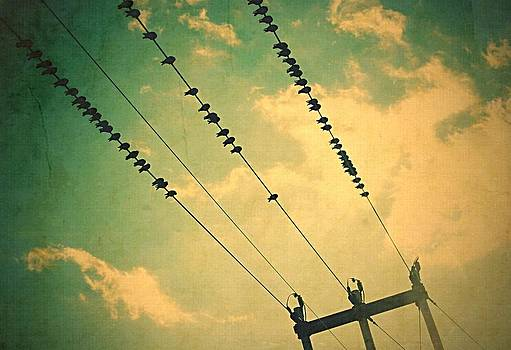 Marysue Ryan - Birds on a wire
