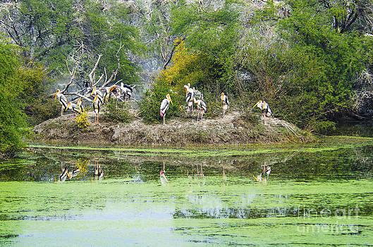 Pravine Chester - Birds on an island