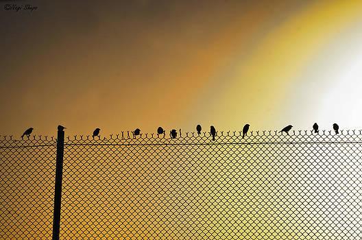 Birds on fence by Nagi Shubo