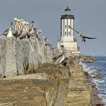 Birds on the Breakwalll by Nick Carlson