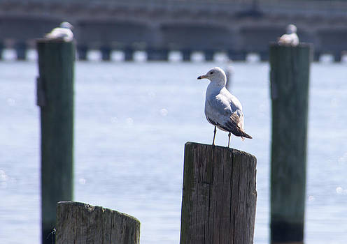 Birds on the Pier by Steve Atkinson