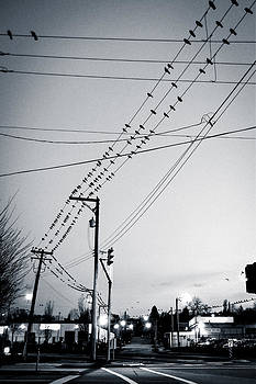 Birds on the Wires by Michele Wright