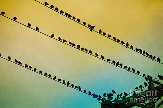 Birds on Wire by Tiffany Rantanen