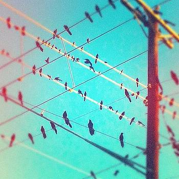 #birds On Wire #vintique by Greta Olivas