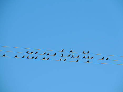 Anastasia Konn - Birds on Wires