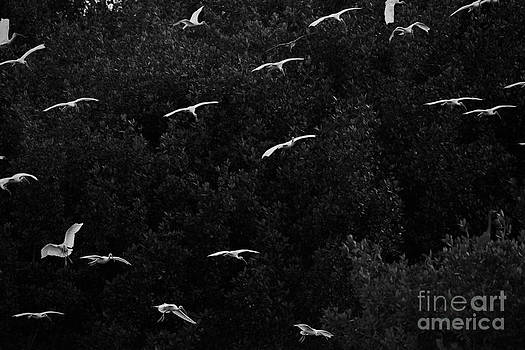Dan Friend - Birds returning to the roost