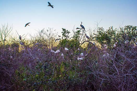 Manuel Lopez - Birds Sleepover