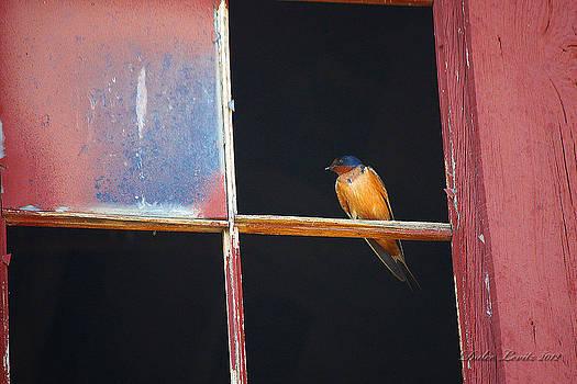 Birdy in the Window H by Dulce Levitz